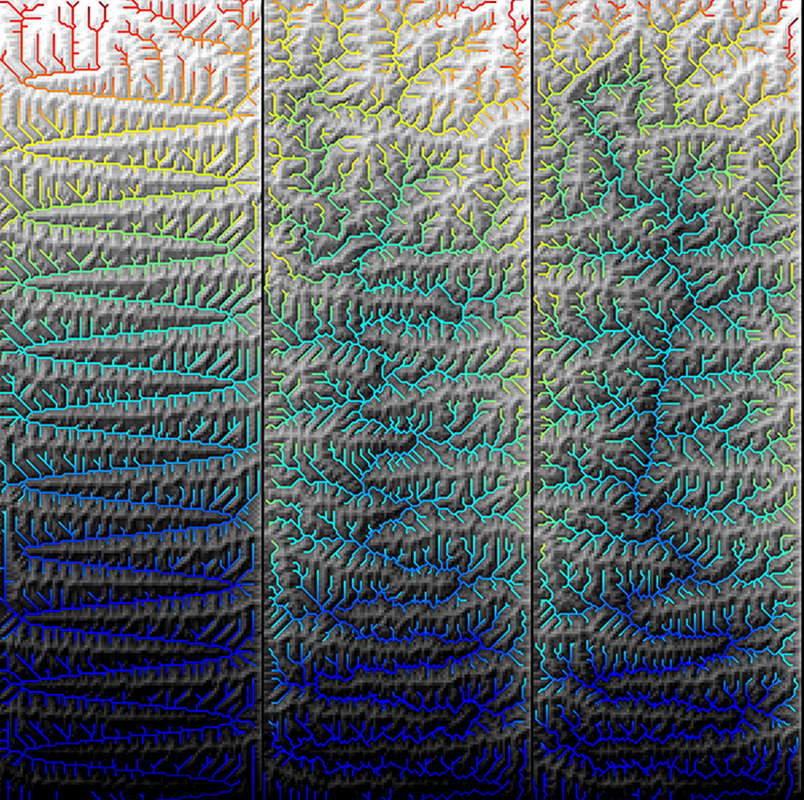 A graphic showing the three panels of modeling results of a landscape and river network evolving over 10 million years. The river starts out as a meandering, s-shaped channel, but evolves into a tree-like pattern.