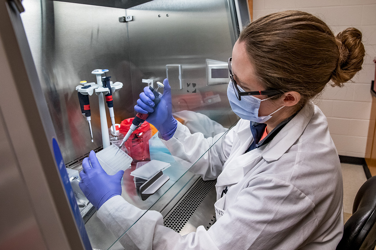 Dr. Robin Holland, a member of the COVID-19 research team for the University of Illinois, Urbana-Champaign, runs tests on saliva samples at the university's Veterinary Diagnostic Laboratory.