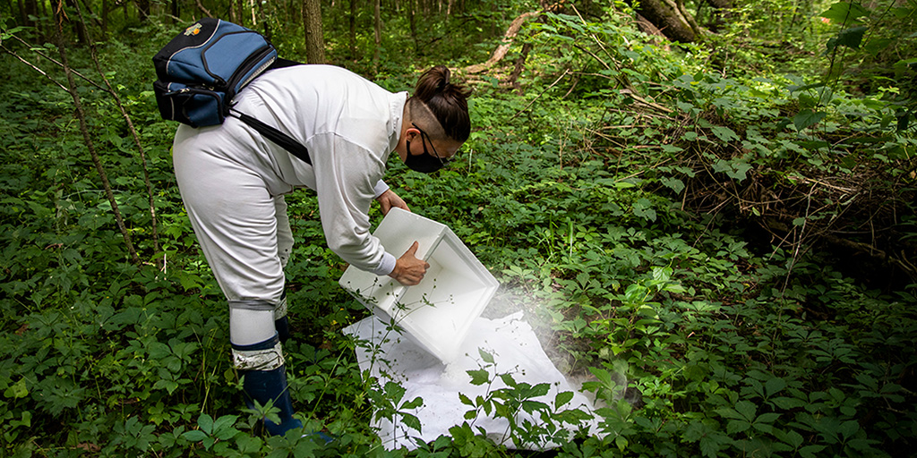 The author is seen bent over a white cloth in a densely wooded landscape. She is dumping dry ice out of styrofoam cooler onto the cloth. She is decked out in her protective gear.