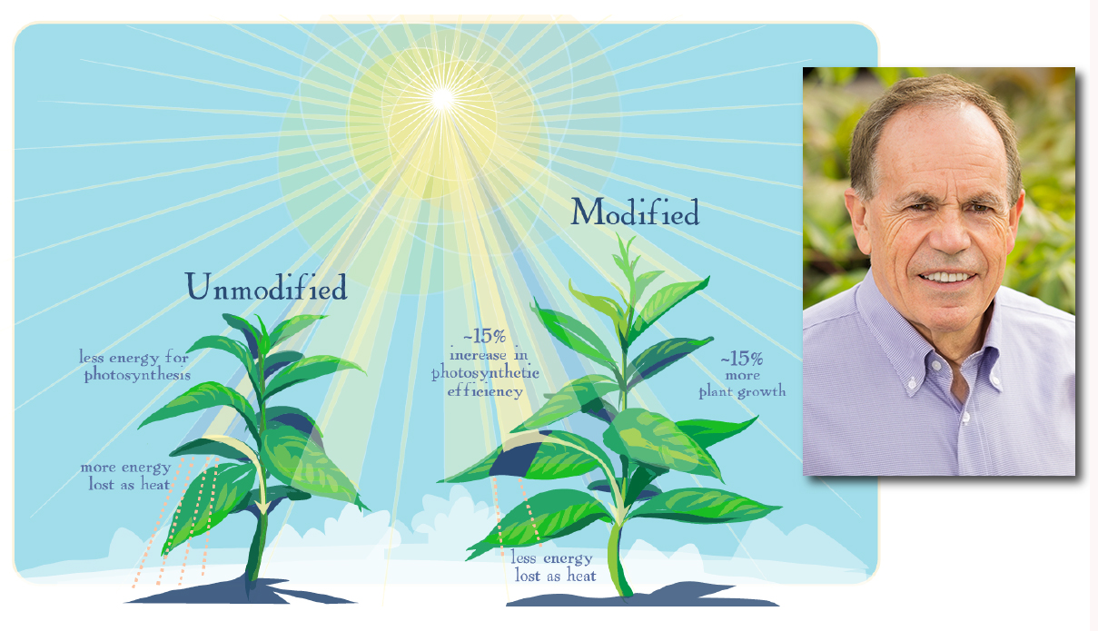 Graphic of two plants, one modified via genetic engineering, one not modified. The modified plant is significantly bigger. Inset photo of researcher.
