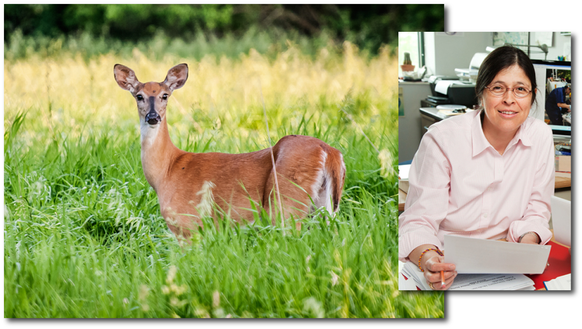 Photo of a white-tailed deer in a prairie. Inset of researcher photo.
