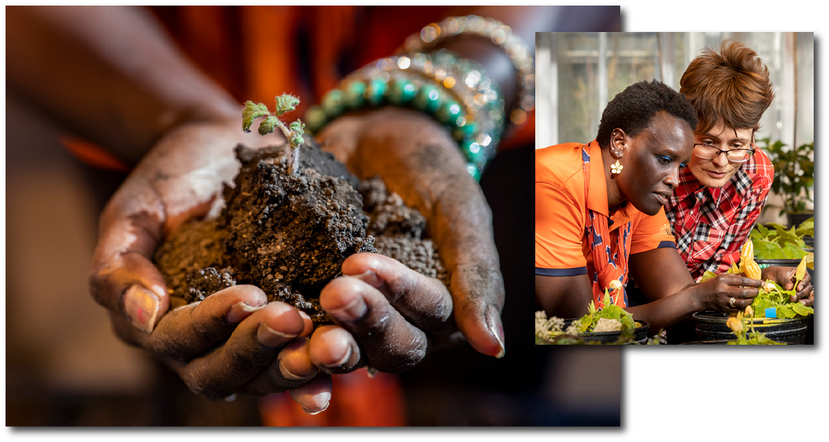 Photo of researcher's hands cupping a clump of soil with a tiny plant emerging from it. Inset photo of researcher with student looking at a plant in the greenhouse..