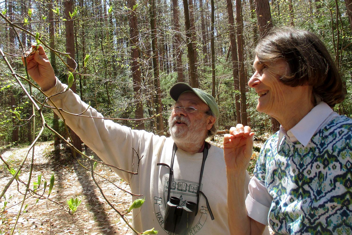 Two researchers examine tree leaves in a forest.