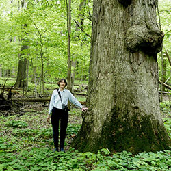 Augspurger stands next to a bur oak tree in an old-growth forest outside Urbana, Illinois.