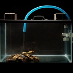 Photo of snake in an aquarium.