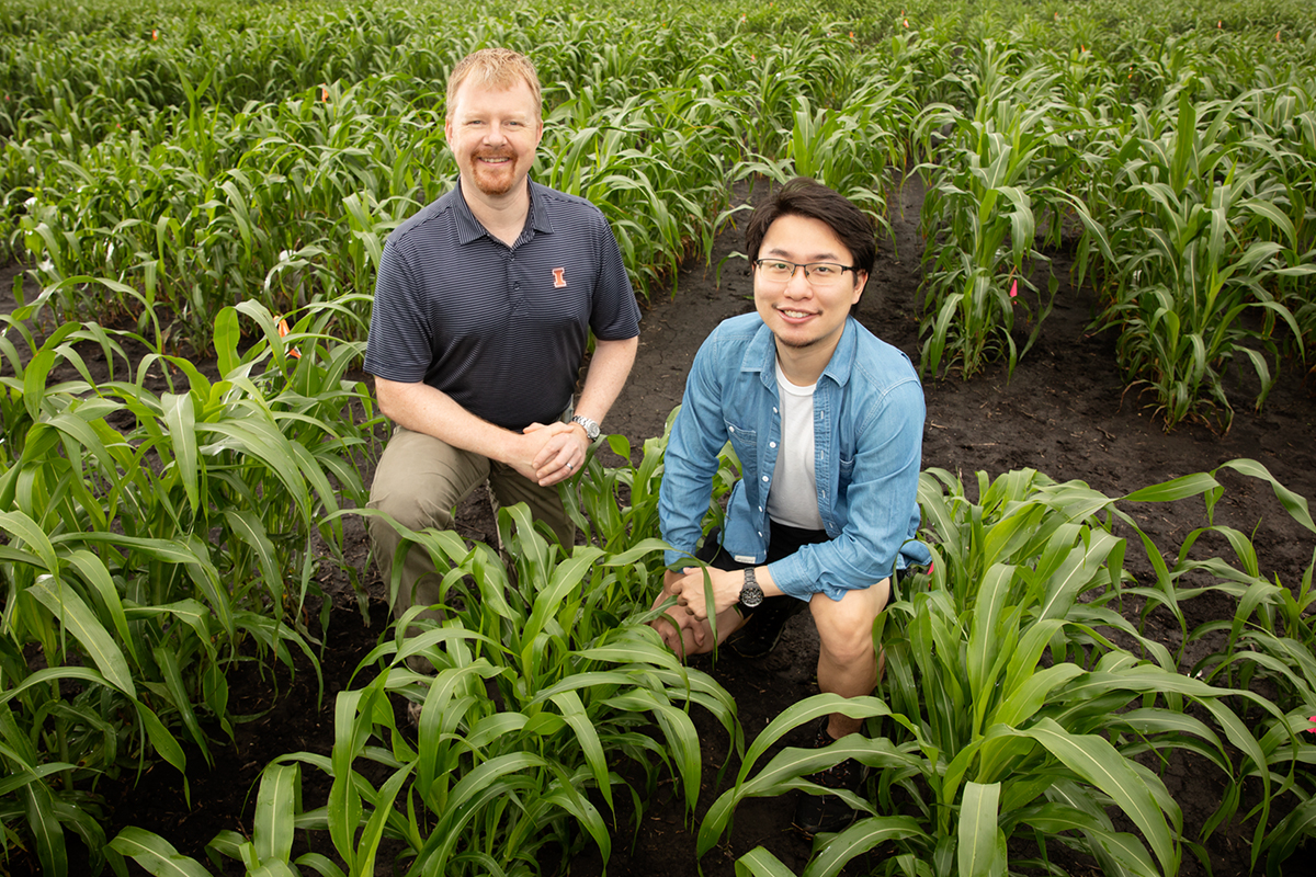 Two researchers in a stand of sorghum.