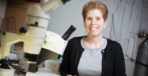 In a study of mice, comparative biosciences professor Jodi Flaws and her colleagues linked BPA exposure during pregnancy to reproductive problems in the next three generations.