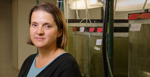University of Illinois animal biology professor Rebecca Fuller and her colleagues found that killifish females that learn to avoid mating with other species also discriminate among members of their own species.
