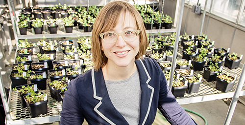 University of Illinois plant biology professor Katy Heath and her colleagues found that long-term nitrogen fertilizer use disrupts the mutually beneficial relationship between legumes and soil microbes.