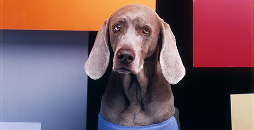 """In the Bauhaus,"" by William Wegman. 1999 Color Polaroid."