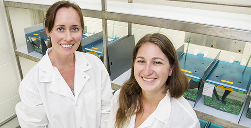 University of Illinois animal biology professor Alison Bell, left, and doctoral student Laura Stein study how stickleback fish dads influence the behavior of their young.