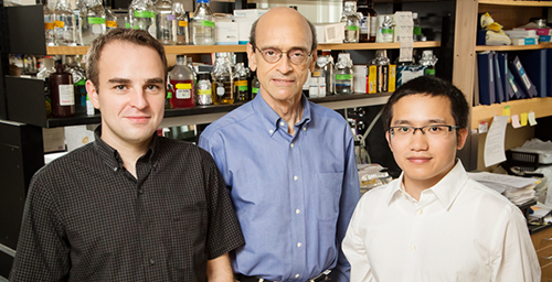 Biochemistry professor David Shapiro (center), M.D.-Ph.D student Neal Andruska (left), graduate student Xiaobin Zheng and their colleagues discovered a new mechanism by which estrogen contributes to the pathology of breast cancer.