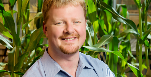 Plant biology professor Andrew Leakey and colleagues report that levels of zinc, iron and protein drop in some key crop plants when grown at elevated CO2 levels.