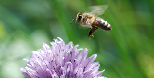 A regulatory gene that aids learning and the detection of novelty in vertebrates increases in activity in the honey bee brain whenever it explores an unfamiliar environment.