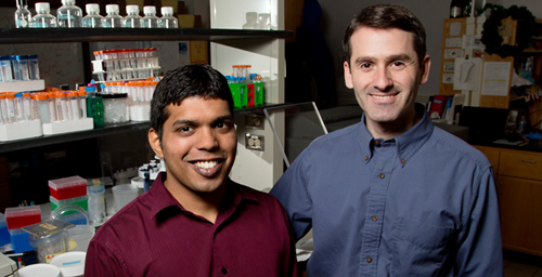 U. of I. chemists - professor Scott Silverman, right, and graduate student Jagadeeswaran Chandrasekar - synthesized a DNA catalyst that can perform a difficult reaction usually catalyzed by the protein enzyme phosphatase.