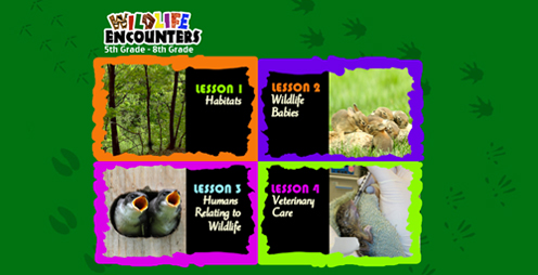 The Wildlife Medical Clinic has created a classroom-focused website to educate students from kindergarten through high school about wildlife, natural resources and conservation efforts by engaging the students with hands-on Internet-based lessons.