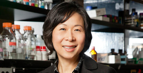 University of Illinois molecular and integrative physiology professor Jongsook Kim Kemper and her colleagues were able to reverse some of the metabolic problems associated with obesity in mice.