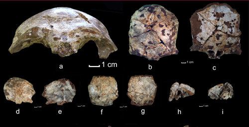 The researchers found skull fragments that date to 63,000 years ago.