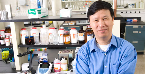 University of Illinois professor Ning Wang and colleagues in China use soft gels to culture the elusive cells that spread cancer from the primary tumor to other places in the body.