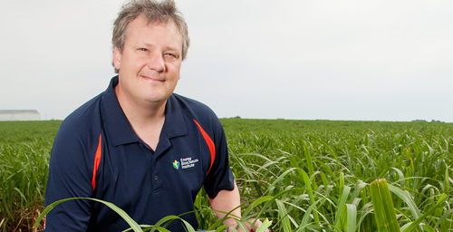 University of Illinois crop sciences professor and Energy Biosciences Institute program leader Stephen Moose and his colleagues mapped the Miscanthus sinensis genome, a first step toward a full genome sequence.