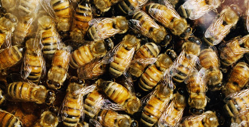 New research indicates that individual honey bees differ in personality traits such as novelty seeking.