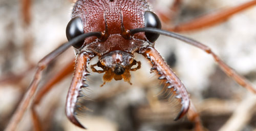 Swarms of six-legged killers thrill at the 29th annual Insect Fear Film Festival.
