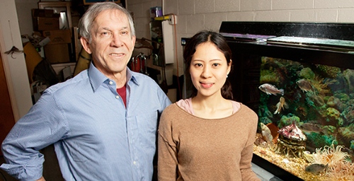 Rhanor Gillette, a University of Illinois molecular and integrative physiology professor, left, and graduate student Keiko Hirayama found a simple circuit in the sea slug brain that integrates hunger, sensory information and memory to drive the animal's response to the smell of food.
