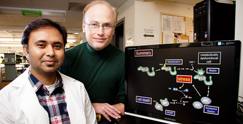 Microbiology professor Steven Blanke, right; doctoral student Prashant Jain and a colleague at Purdue University found a mechanism linking Helicobacter pylori infection, impairment of the mitochondria and cell death.