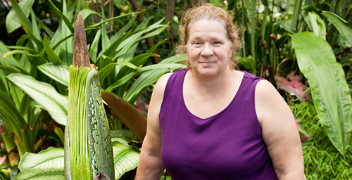Greenhouse Manager Debbie Black stands by the university's titan arum, commonly called a corpse flower, in the Plant Biology Greenhouse. The 10-year-old plant, expected to bloom for the first time around July 14 or 15, will emit a pungent odor reminiscent of decaying meat to attract pollinating insects.