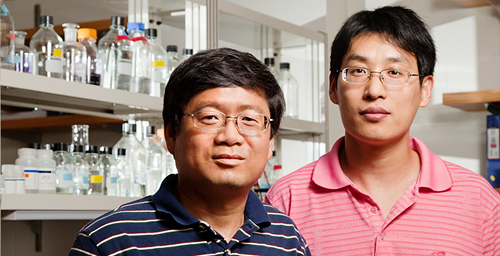 In a new study, University of Illinois medical biochemistry professor Lin-Feng Chen, left, research scientist Bo Huang and their colleagues identified a new breast cancer tumor suppressor protein, Runx3, and determined how it functioned.