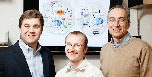 In a study of fruit flies, University of Illinois entomology professor Barry Pittendrigh, left; postdoctoral researcher Kent Walters, center; crop sciences professor Manfredo Seufferheld and their colleagues found that meth exposure influenced molecular pathways associated with energy generation, sugar metabolism, sperm cell formation, cell structure, hormones, skeletal muscle and cardiac muscles.
