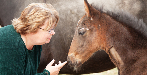 """Because our patients can't talk to us, we have to figure out what's wrong with them based on physical examination and testing and histories given by their owners,"" said Pamela Wilkins, a professor of equine internal medicine and emergency/critical care at the University of Illinois and author of a new paper on equine neonatal intensive care."