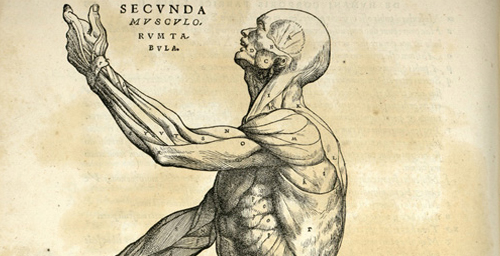 Anatomical studies from the Renaissance, like this etching by a 16th century anatomist who went by the name Andreas Vesalius, are used throughout the Body Worlds exhibits and in promotional materials to potential donors to connect the display of human bodies to the age-old study of anatomy.
