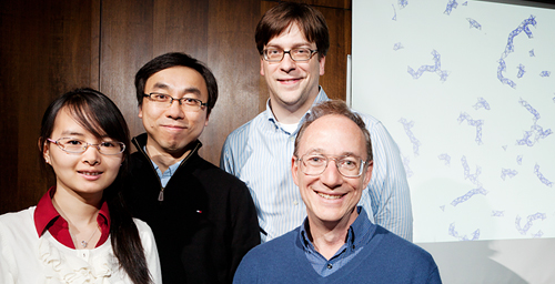 "Researchers led by Founder Professor of Engineering Steve Granick, right, have developed tiny spheres that attract water to form ""supermolecule"" structures. Team members, from left, Qian Chen, doctoral student in materials science and engineering; Sung Chul Bae, research scientist; and Jonathan Whitmer, doctoral student in physics."