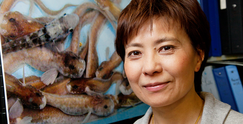 Illinois animal biology professor Christina Cheng led a study that traced the evolution of a gene for an antifreeze protein in an Antarctic fish from the gene for a protein with an entirely different function.