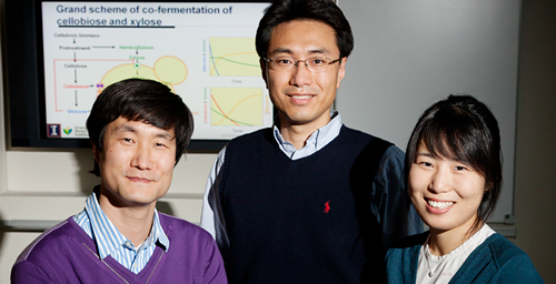 Illinois food science and human nutrition professor Yong-Su Jin, center, postdoctoral researcher Suk-Jin Ha, left, graduate student Soo Rin Kim and their colleagues engineered a yeast that outperforms the industry standard in the production of ethanol from cellulosic biomass. The effort involved researchers at Illinois, the Lawrence Berkeley National Laboratory, the University of California at Berkeley, Seoul National University and the oil company BP.