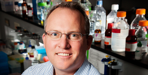Animal sciences professor and Division of Nutritional Sciences director Rodney Johnson and his colleagues found that the plant compound luteolin can reduce brain inflammation and reverse age-related memory deficits in mice.