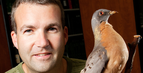 Kevin Johnson, an ornithologist with the Illinois Natural History Survey at the University of Illinois, led a genetic study that placed the extinct passenger pigeon in the family tree of pigeons and doves.