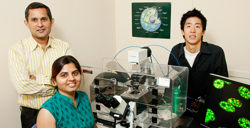 "Cell and developmental biology professor Kannanganattu Prasanth, left, postdoctoral researcher Vidisha Tripathi, seated, undergraduate research assistant David Song and their colleagues found that a long non-coding RNA, MALAT1, plays a key role in pre-mRNA processing. Aberrant regulation of the MALAT1 gene is associated with several cancers, as are some of the splicing factors it regulates. Similarly, some of the genes whose pre-mRNA splicing is regulated by MALAT1 are cancer ""signature genes."""