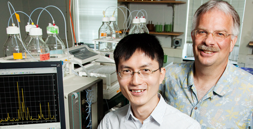 Craig Mizzen, a professor of cell and developmental biology at the University of Illinois, right; Yupeng Zheng, a doctoral student at the time of the study; and their colleagues discovered that the phosphorylated H1 histone protein has an important role in regulating gene activity.