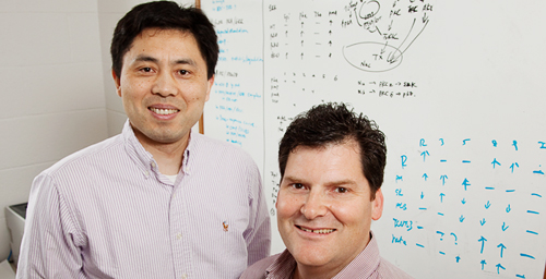 Molecular and integrative biology professors Yang (Kevin) Xiang, Charles Cox and their colleagues found a potential new drug target for the treatment of Alzheimer's disease.