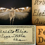 View a slide show of the history of entomology at Illinois.