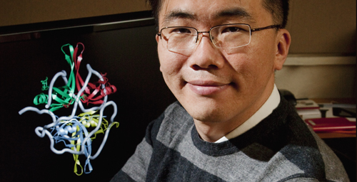 University of Illinois physics professor Taekjip Ha and his colleagues found that the SSB protein travels along single-stranded DNA, regulating other proteins needed for DNA repair, replication and recombination.