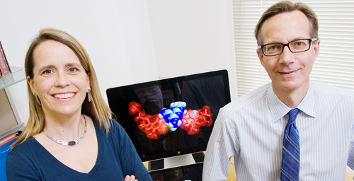 Chemistry professors Anne Baranger and Steven Zimmerman and their colleagues designed a small molecule that prevents an abnormal RNA from binding to a protein that normally splices other RNAs.