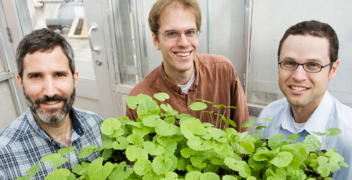 From left, Adam Davis, of the USDA, Illinois Natural History Survey postdoctoral researcher Richard Lankau and INHS plant ecologist Greg Spyreas found that the invasive garlic mustard plant produces lower levels of a defensive toxin after about three decades in a new location.