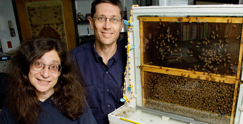 University of Illinois entomology professor and department head May Berenbaum and entomology and neuroscience professor Gene Robinson and their colleagues identified a mechanism that could explain the variety of ill effects seen in Colony Collapse Disorder.