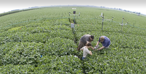 Andrew Leakey's team made use of the Soybean Free Air Concentration Enrichment (Soy FACE) facility at Illinois. This open-air research lab can expose a soybean field to a variety of atmospheric CO2 levels - without isolating the plants from other environmental influences, such as rainfall, sunlight and insects.