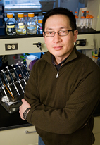 Researcher Gerard Wong led the team of researchers who found a way to fool a bacteria's evolutionary machinery into programming its own death.