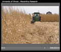 View a narrated slideshow about Miscanthus research at the University of Illinois