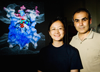 Biochemistry professor Emad Tajkhorshid, right, and biophysics graduate student Yi Wang have identified a key step in the cellular recycling of ATP that allows your body to produce enough of it to survive. ATP is the primary energy source for most cellular functions.